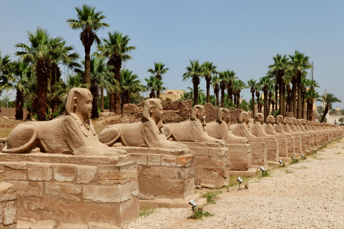 Egypte - Louxor - Avenue du Sphinx